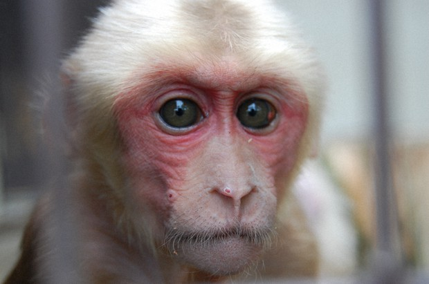 Gorin Sang Monyet Asli Cina, Pelipur Lara Bonbin Tobe